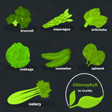 Chlorophyll vegetables color icons set for web and mobile design Stock Photos