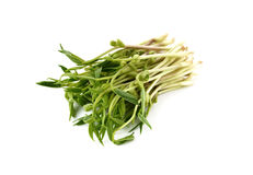 Chlorophylla green bean sprouts on white Stock Image