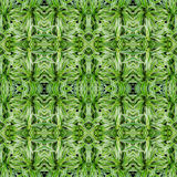 Chlorophytum bichetii (Karrer) Backer.seamless pattern backgroun Royalty Free Stock Photos