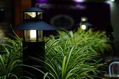 Chlorophytum and lamp Royalty Free Stock Image