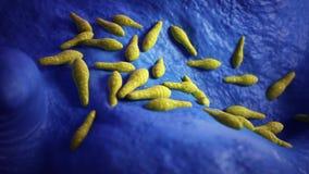 Chlostridium bakterie ilustracja wektor