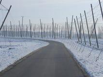 Chmiel pola dla piwa w wintertime Zdjęcie Royalty Free