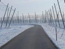 Chmiel pola dla piwa w wintertime Obraz Stock