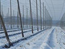 Chmiel pola dla piwa w wintertime Fotografia Stock