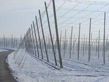 Chmiel pola dla piwa w wintertime Obrazy Stock