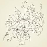 Chmiel z liśćmi odizolowywającymi. royalty ilustracja