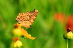 Chmielni motyle w kwiatu morzu Fotografia Stock