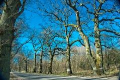 Chmielny las obrazy royalty free