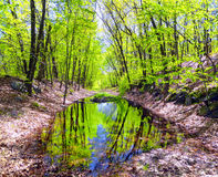 Chmielu strumyka tamy stanu park w Naugatuck Obraz Royalty Free