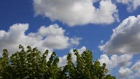 Chmur i liści timelapse zdjęcie wideo