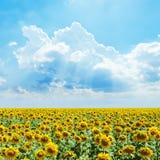 Chmur i słoneczników pole Obraz Stock