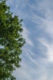 Chmur pierzastych chmury Obraz Stock