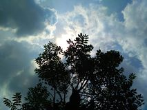 Chmura i drzewa Obraz Royalty Free