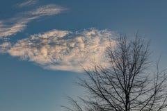 Chmura i drzewo Obrazy Royalty Free