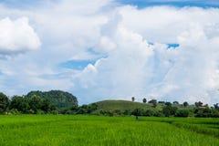 chmurna dzień pola zieleń Obrazy Royalty Free