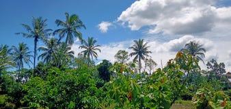 Chmurni Kokosowi drzewa zdjęcie royalty free