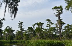 Chmurni nieba Nad bagnami Luizjana i zalewiskiem obraz royalty free