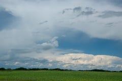 Chmurni nieba nad canola pola, Saskatchewan, Kanada obraz stock
