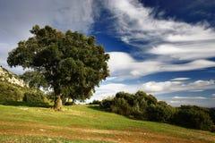chmurnieje drzewa Zdjęcia Stock