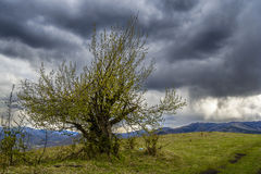 chmurnieje drzewa Obrazy Stock