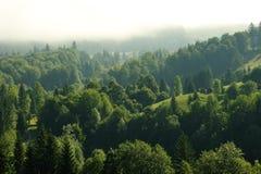 chmurnieje jedlinowego las Zdjęcia Stock