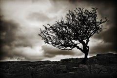 chmurnieje sylwetkowych drzewa Obrazy Royalty Free