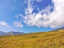 Chmurnieje w niebieskiego nieba i kolor żółty trawy polu Obraz Stock