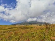 Chmurnieje w niebieskiego nieba i kolor żółty trawy polu Zdjęcie Royalty Free