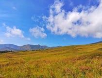 Chmurnieje w niebieskiego nieba i kolor żółty trawy polu Obraz Royalty Free