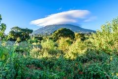 Chmurnieje wulkan łąkę kwiaty &, Gwatemala Fotografia Royalty Free