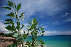 chmurnieje zielonego morze Fotografia Royalty Free