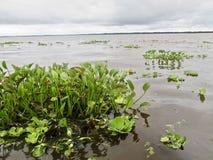 Chmurny krajobraz w amazonas zdjęcia stock
