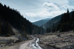 Chmurny krajobraz w lesie po deszczu Zdjęcie Royalty Free