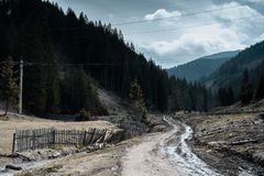 Chmurny krajobraz w lesie po deszczu Obrazy Royalty Free