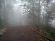 chmurny las Obraz Stock