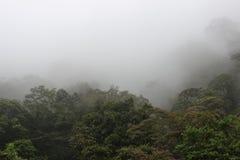 chmurny las Obrazy Royalty Free