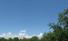 Chmurny niebo i Treetops Zdjęcia Stock