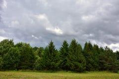 Chmurny niebo, jedlinowy las, chmurny dzień w lesie obrazy stock