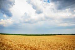 Chmurny niebo nad złotym polem Fotografia Royalty Free