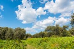 Chmurny niebo nad zielonym polem w wiośnie Zdjęcia Royalty Free