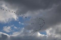 Chmurny niebo z ptasią formacją zdjęcia stock