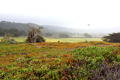 Chmurny Ostry piękno obraz stock