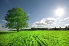 chmurny pola zieleni nieba drzewo Obrazy Royalty Free