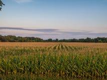 Chmurny zmierzch Nad Wiejskiej Kukurydzanej uprawy Rolnym polem Zdjęcia Stock