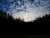 Chmury dogania drzewa, dogania słońce zdjęcia royalty free