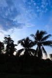 Chmury i drzewo sylwetki po zmierzchu Zdjęcia Royalty Free