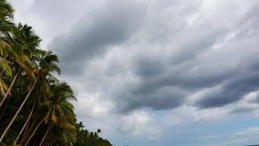 Chmury nad drzewek palmowych 01 czasu upływem zbiory