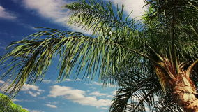 Chmury nad drzewkiem palmowym Timelapse zdjęcie wideo