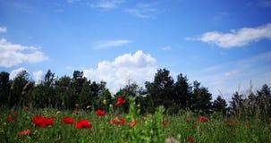 Chmury nad lasem przy dniem i polem zdjęcie wideo