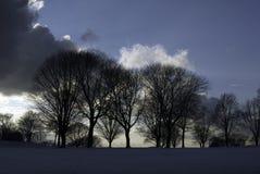 chmury nad scudding drzewami Zdjęcia Royalty Free